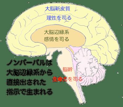 ノンバーバルと大脳辺縁系