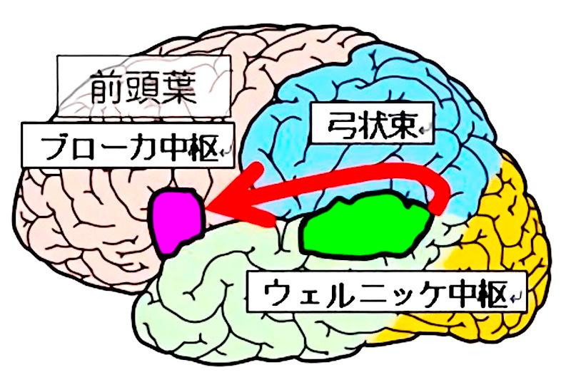 脳と言語・思考・理解